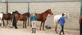 Meerdaalhof - Oud-Heverlee - Fotogalerij(2015 kampen)