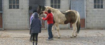 Meerdaalhof - Oud-Heverlee - Fotogalerij(j12 krokus)