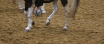 Meerdaalhof - Oud-Heverlee - Fotogalerij(j12 horseball)